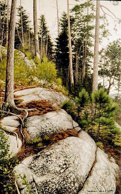 8_Andrew_Miles_Trees_And_Rocks_2003